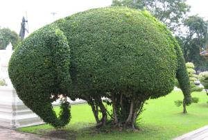 elephanttopiary22